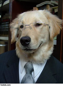 educated-dog-wearing-suit-and-tie (1)