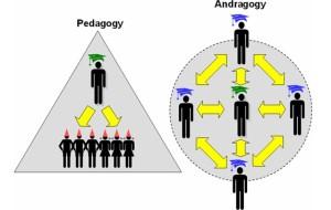 pedagogy-andragogy